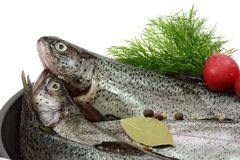 Trout Breeding. Close-up of raw rainbow trouts in a pan ready to cook Royalty Free Stock Images