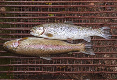 Trout caught and layed on the grill Royalty Free Stock Images