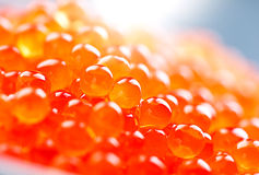 Trout caviar closeup Royalty Free Stock Images