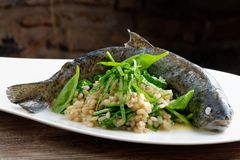 Trout cooked with barley and spinach Royalty Free Stock Image