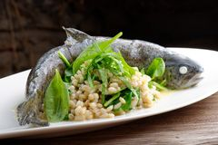 Trout cooked with barley and spinach Royalty Free Stock Photography