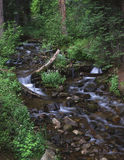 Trout Creek. A mountain stream through a green forest Royalty Free Stock Images