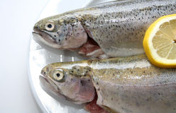 Free Trout Dish Royalty Free Stock Photos - 4255628
