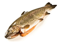 Trout eviscerated Stock Photos