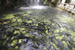 Trout farm Stock Photography