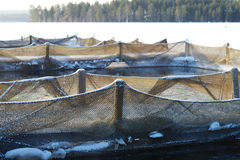 Trout farm Stock Image