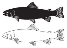 Trout royalty free illustration