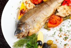 Trout fish Stock Images