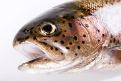 Trout fish Stock Photos