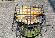 Trout fish on barbeque Stock Images