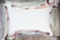 Trout fish frame. Stock Image