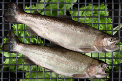 Trout fish on the grill Royalty Free Stock Images