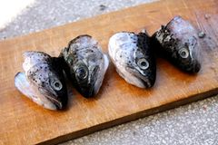 Trout fish heads Royalty Free Stock Images