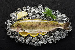 Trout fish and ingredients on ice on a black stone table. Top view Royalty Free Stock Photos
