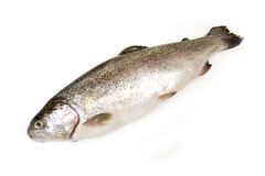 Trout fish isolated on white  Stock Image