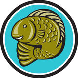 Trout Fish Jumping Circle Cartoon. Illustration of a trout fish jumping set inside circle on isolated background done in cartoon style Royalty Free Stock Images