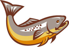 Trout Fish Jumping Retro. Illustration of a trout fish jumping on isolated white background done in retro style Royalty Free Stock Image