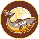 Trout Fish Jumping Sunburst Circle. Illustration of a trout fish jumping set inside circle with sunburst in background done in retro style Stock Photos