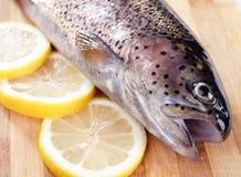 Trout fish lemon Stock Images