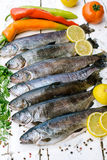 Trout fish Royalty Free Stock Photos