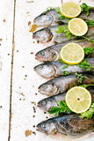 Trout fish Royalty Free Stock Photography