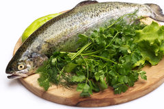 Trout fish with spices. Fresh trout on wood cutting board on on white background Royalty Free Stock Photos
