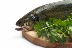 Trout fish with spices. Fresh trout on wood cutting board on on white background Stock Photography