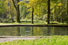Trout fish swimming in freshwater, during Autumn in Germany, Eu Stock Image