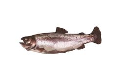 Trout fish on a white. Fresh rainbow trout fish on a white stock photo