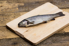 Trout fish Royalty Free Stock Image