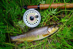 Trout fishing. Fly fishing for  Browns in the mountains of New Mexico Royalty Free Stock Image
