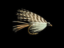 Trout Fishing Fly. Blue Wet Trout Fishing Fly Isolated on Black Background royalty free stock images