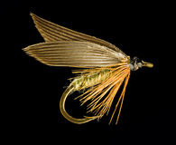 Trout Fishing Fly Stock Images