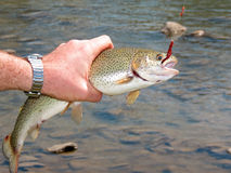 Trout fishing Stock Images