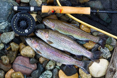 Trout Fishing Success Stock Images
