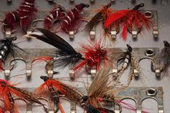Trout flies Stock Images