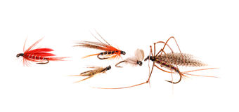 Trout Flies. Stock Photos