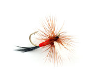 Trout fly Stock Image