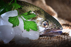 Trout fresh greens ice Royalty Free Stock Photography