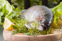 Trout. Fresh trout prepared for cooking Royalty Free Stock Photography