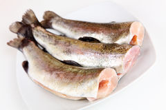 Trout Royalty Free Stock Photos