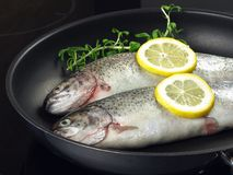 Trout on frying pan Stock Image