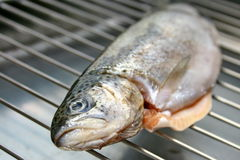 Trout on grill Royalty Free Stock Photos