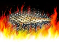 Trout on grill Stock Photos