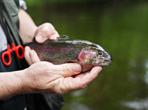 Trout in Hand Stock Photography