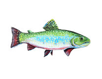Trout Royalty Free Stock Image