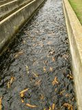 Trout Hatchery Raceway Royalty Free Stock Photo