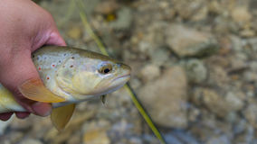 Trout Head Stock Photo