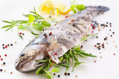 Trout with herbs Stock Images