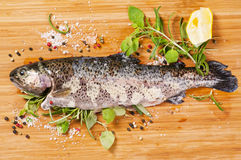 Trout with herbs Stock Photos